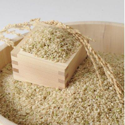画像2: 【2年度産】きぬむすめ 玄米10kg